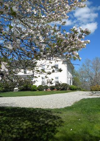 North Stonington, CT: Dogwoods