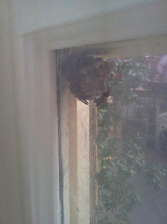 Courtyard by Marriott Kansas City Country Club Plaza: Whoa! Wasp nest outside the window! We're safe behind two panes of glass. Whew.