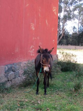Hacienda Guachala: Healthy, happy animals.