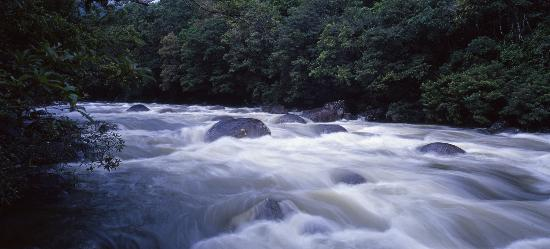 Freestyle Resort Port Douglas: Mossman Gorge