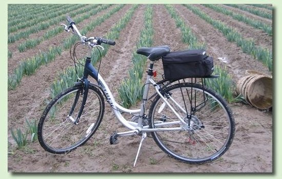 Tulip Country Bike Tours