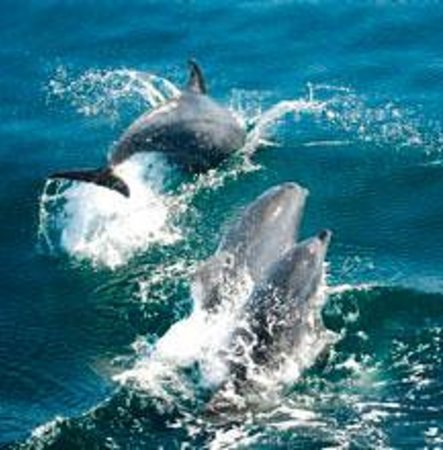 Sea'Scape Dolphin Watch