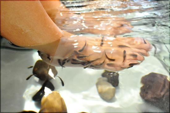 Natural fish spa paris france on tripadvisor address for Fish spa near me