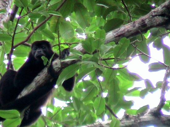 Tierra de Suenos Lodge: Singe dans le gte