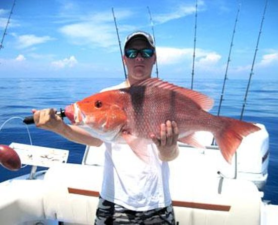 A day of deep sea fishing near sanibel picture of reel for Deep sea fishing fort myers beach