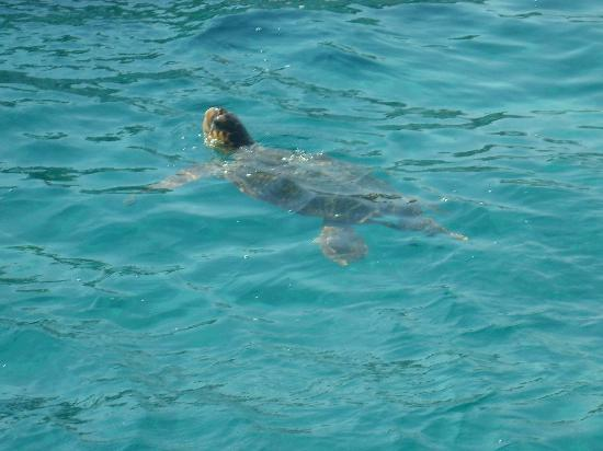 John & Joy Hotel: Caretta Turtle