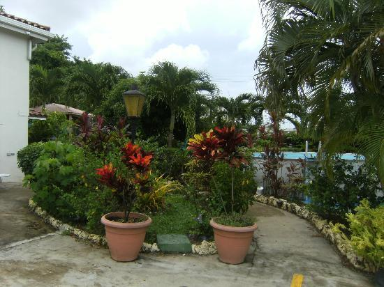 Palm Paradise Guest House + 2 Apartments張圖片