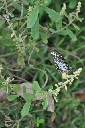 Coconut Lagoon: Guided butterfly tour