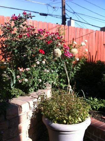 Queen Anne Bed & Breakfast: Outdoor Garden