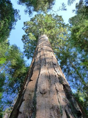 Springville, CA: Nearby giant sequoias!