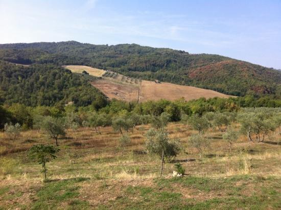 Pari, Italy: view out over the olive groves