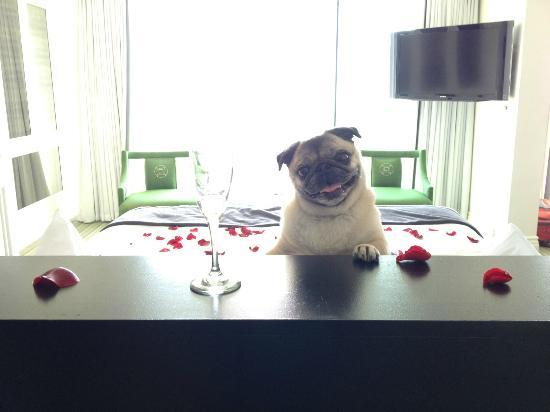 Viceroy Santa Monica: Yes our dog was quite happy here.