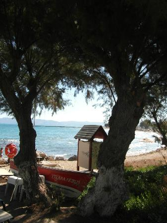 Aphrodite Beach: The beach