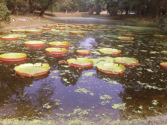 indian botanical garden kolkata india address attraction reviews tripadvisor