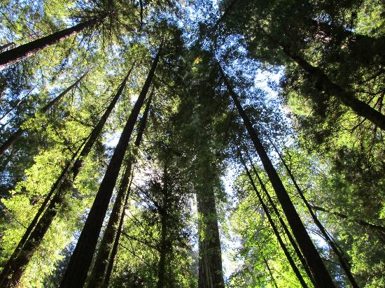 Fern Grove Cottages: Redwoods in Armstrong Preserve