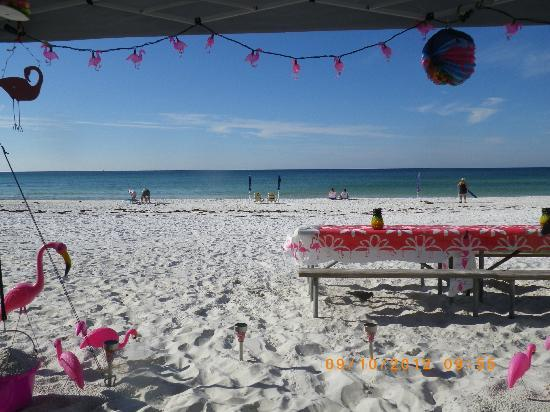 Camp Gulf: Flamingos just go with the beach and friends