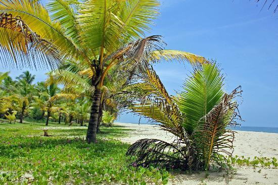 Marari Beach Resort: the beach