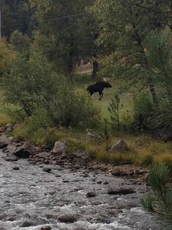 Paradise on the River: Moose behind the camper