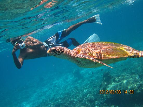 Lily Beach Resort & Spa: Big sea turtle!