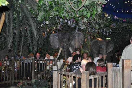 Overlooking the entrance of the restaurant picture of for Rainforest londra