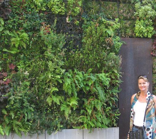"Hotel Modera: Be sure to check out their ""living wall"" adjacent to their firepits."