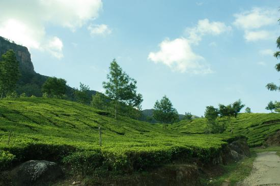 Camp Noel: Tea estates