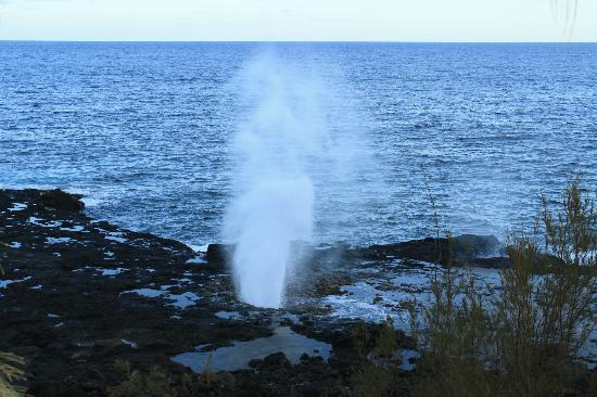 Turtle Cove Suites: Spouting Horn - Short walk from Turtle Cove