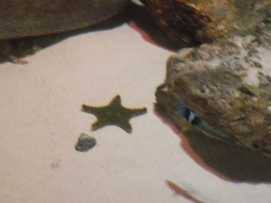 Sealife aquarium star fish picture of sea life kansas for Kansas city star fishing report