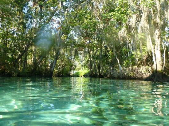 Inglis, Флорида: Three Sisters springs located close to Pine Lodge