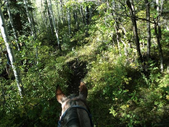Majestic Dude Ranch: One of the Trail Rides