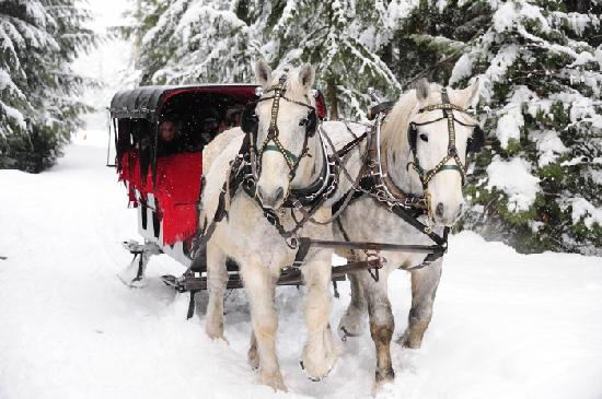 Enjoying a sleigh ride tour in and around Whistler. Photo credit: Steve Rogers