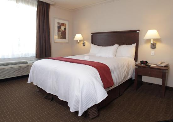 BEST WESTERN PLUS Guildwood Inn: Guest Room