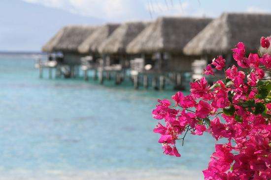 Sofitel Moorea Ia Ora Beach Resort: Bungalows