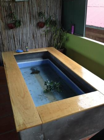 Golden TaKeo Guesthouse: newly constructed fish spa