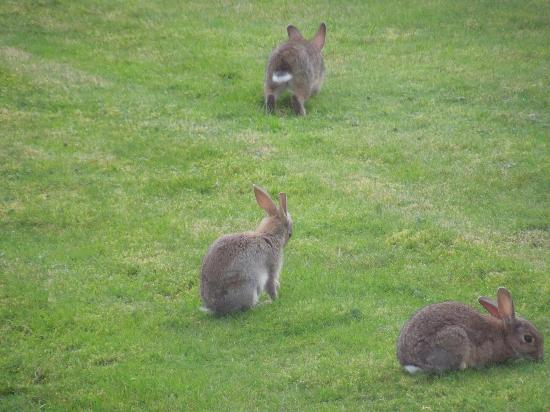 Macdonald Aviemore Highland Resort: Rabbits just outside our bedroom window