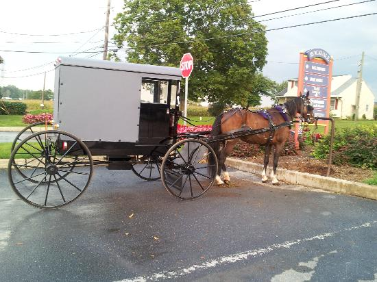 Holiday Inn Express Lancaster-Rockvale Outlets: Amish transportation....