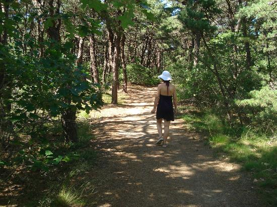 North Of Highland Camping Area: Path to the beach