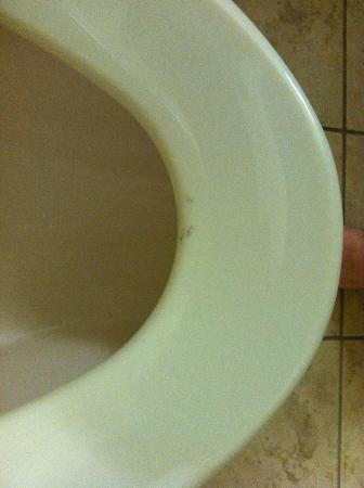Holiday Inn Express Charlotte-Arrowood: gunk on toilet seat of first room
