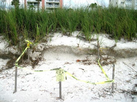 Keystone Motel: Seaturtles nesting area