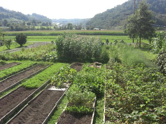 Friendsville, MD: Garden