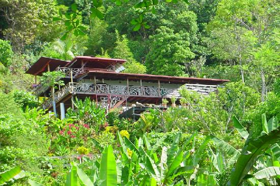 Lookout Inn Lodge: Lookout Inn - In the jungle yet on the beach