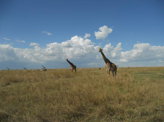 Mara Explorer Camp: So many animals