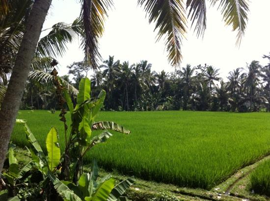 Junjungan Ubud Hotel and Spa: beautifull view from our balcony