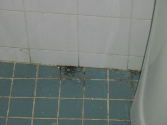 Hostal CasaBlanca: termities droppins on the bathroom floor