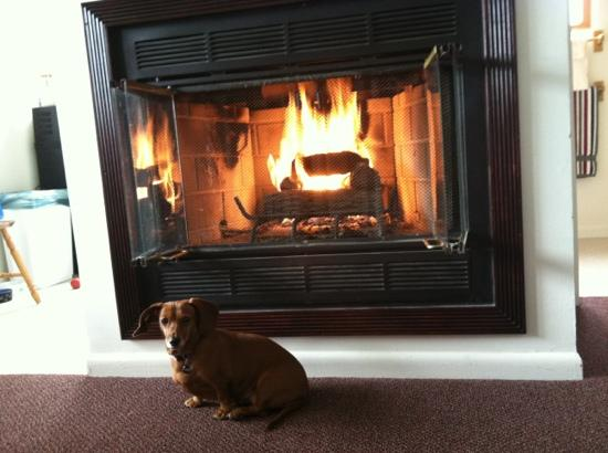 Columbine Inn: fireplace suite is dog friendly!