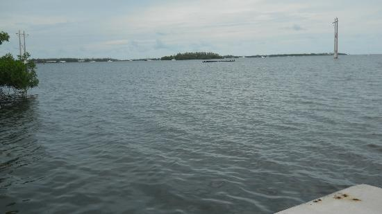 Banana Bay Resort - Key West: One of the Gulf views from the beach
