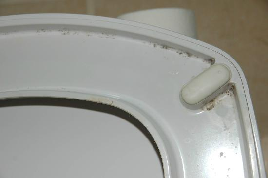 Hotel Promise: toilet glasses with mold - all week!
