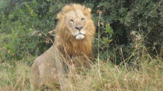 Your reward staing at Nairobi Tented Camp is that you see too many of these every day