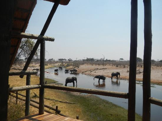Savute Safari Lodge: View from Verandah Room 3