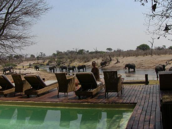 Savute Safari Lodge: Pool with the elephants